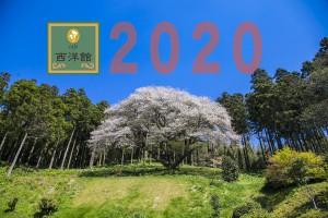 2020さくら2jpg